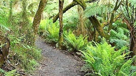 Mt Dandenong Walk