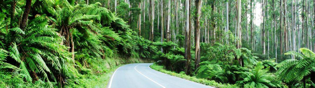 The Ultimate Dandenong Ranges Holiday Guide