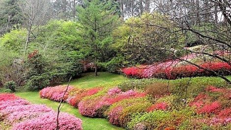 National Rhododendron Gardens
