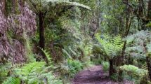 Dandenong-ranges-national-park-e1519308856754
