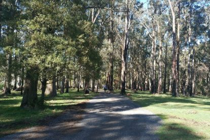 one tree hill picnic ground 09
