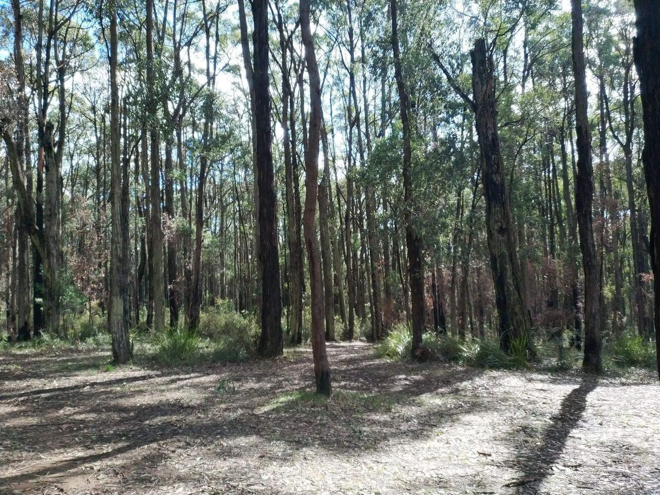 Wright Forest 03
