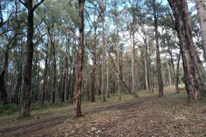 Wright Forest 11