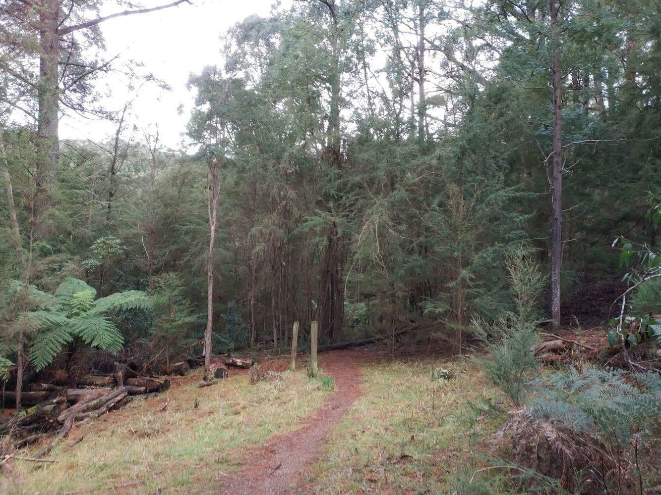 Olinda Creek Track 01