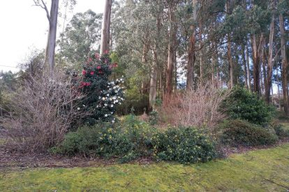 Pirianda Gardens- Gardens of the Dandenong 01