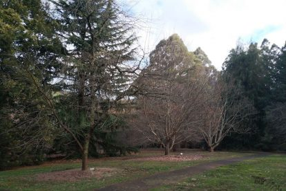 Pirianda Gardens- Gardens of the Dandenong 07