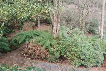 Pirianda Gardens- Gardens of the Dandenong 18