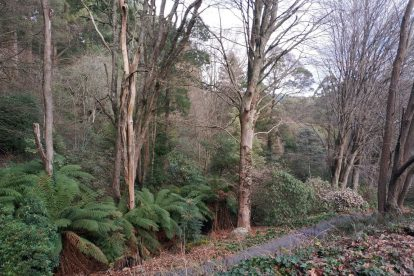 Pirianda Gardens- Gardens of the Dandenong 19